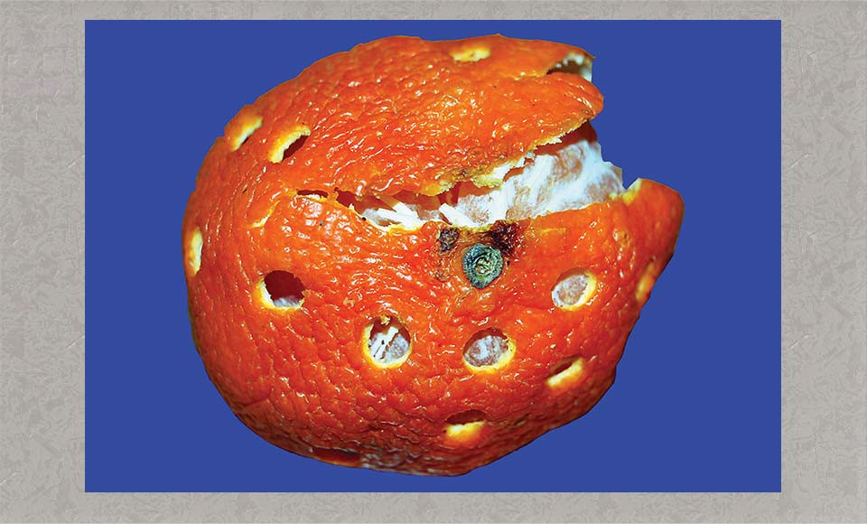 Braille Orange, photograph by Rebecca Dick